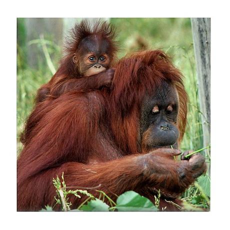 Orangutan's Tile Coaster