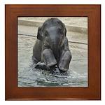 Asian Elephant Framed Tile