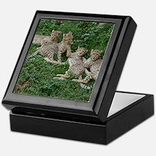 Young Cheetahs Keepsake Box