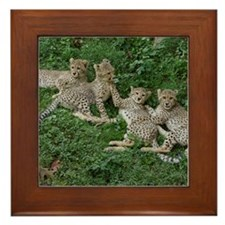 Young Cheetahs Framed Tile