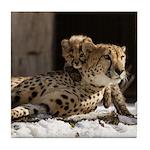 Mom and Baby Cheetah Tile Coaster