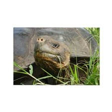 Galapagos Islands Turtle Rectangle Magnet