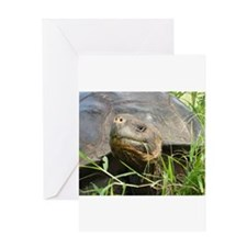 Galapagos Islands Turtle Greeting Card