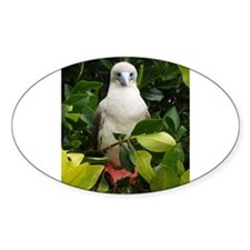 Galapagos Islands Red Footed Oval Decal