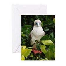 Galapagos Islands Red Footed Greeting Cards (Pk of