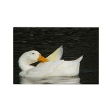 Cute Duck pictures Rectangle Magnet