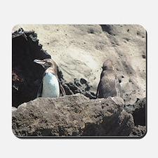 Galapagos Penquins Mousepad