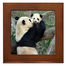 Mom & Baby Giant Pandas Framed Tile