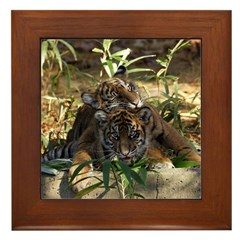 Sumatran Tigers Framed Tile