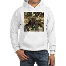Sumatran Tigers Hooded Sweatshirt