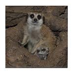 Meerkats Tile Coaster