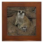 Meerkats Framed Tile