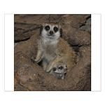 Meerkats Small Poster
