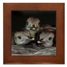 Greater Rhea Chicks Framed Tile
