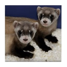 Black-footed Ferrets Tile Coaster