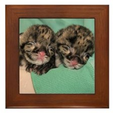 Clouded Leopard Cubs Framed Tile