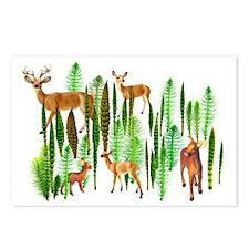 Deer in Horsetails Postcards (Package of 8)