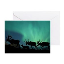 Caribou Greeting Cards (Pk of 10)