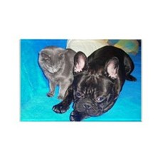 Cute Dog frenchie Rectangle Magnet