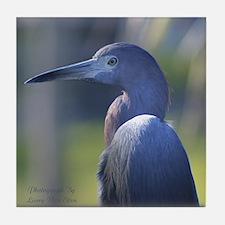 Little Blue Heron Portrait Tile Coaster