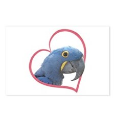 Hyacinth Macaw Heartline Postcards (Package of 8)
