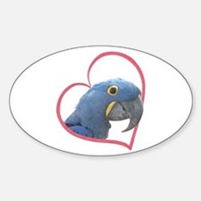 Hyacinth Macaw Heartline Oval Decal
