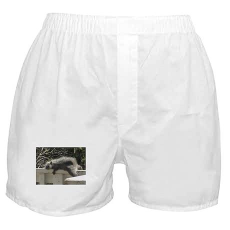 Bum Squirrel Boxer Shorts