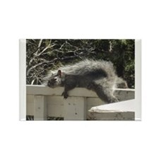 Bum Squirrel Rectangle Magnet
