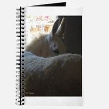 White Donkey Journal