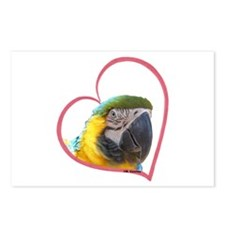 BG Macaw Heartline Postcards (Package of 8)
