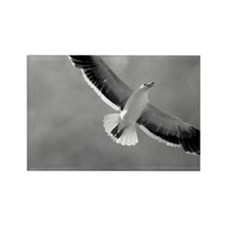 Espiritu Santo 79 Rectangle Magnet (10 pack)