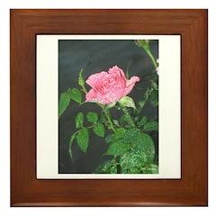 Dewy Pink Rose Framed Tile