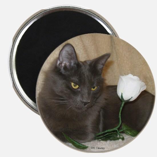 Rose Kitty1 Magnet