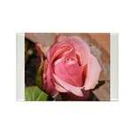 Pink Rose Rectangle Magnet (100 pack)