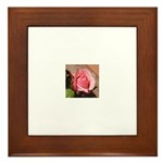 Pink Rose Framed Tile