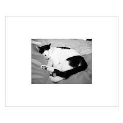 Sleepy Kitty Posters