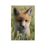 Fox 10 Pack