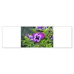 Purple Pansy Bumper Sticker (10 pk)