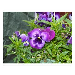 Purple Pansy Posters