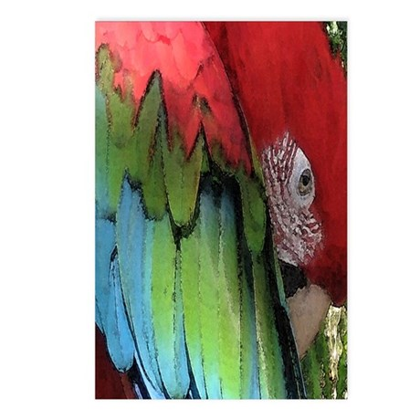 Napping Greenwing Postcards (Package of 8)