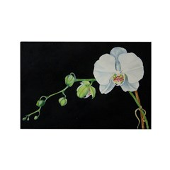 Watercolor White Orchid on Bl Rectangle Magnet (10