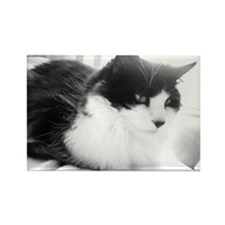 Black and White Longhaired Cat Rectangle Magnet
