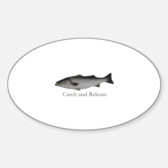 Striped Bass Catch and Releas Oval Decal