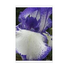 Iris Storm Posters
