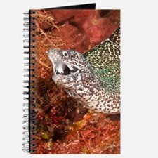 Spotted Moray Blank Journal