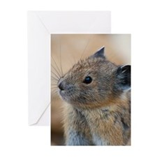 American pika Greeting Cards (Pk of 20)