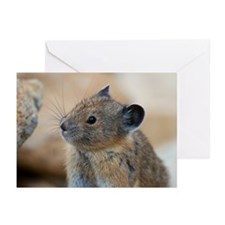 American pika Greeting Cards (Pk of 10)