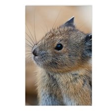 Unique American pika Postcards (Package of 8)