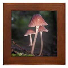 Tiny Forest Mushrooms on a Log Framed Tile