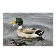 Ducks Postcards (Package of 8)
